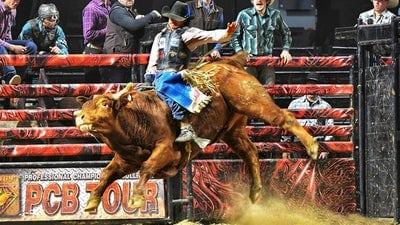 Bull Riding Event